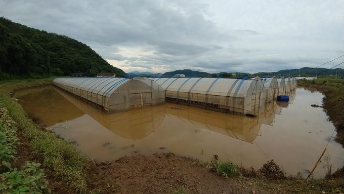 """[르포] """"올 농사 다 끝났어""""…폭우·침수에 신음하는 군남면 농민들"""
